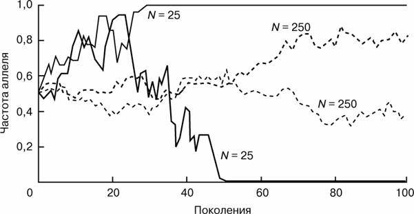 Рис.1 ИЗМЕНЕНИЕ ЧАСТОТ АЛЛЕЛЕЙ ПРИ ДРЕЙФЕ. Представлены результаты моделирования процесса дрейфа генов в двух популяциях численности N = 25 и двух популяциях численности N = 250, при частоте аллеля равной 0,5 в исходном поколении. Под действием дрейфа частота данного аллеля хаотически меняется из поколения в поколение, причем «скачки» частот более выражены в популяциях меньшей численности. За 50 поколений дрейф привел к фиксации аллеля в одной популяции численности N = 25, и к полной его элиминации – в другой. В популяциях большей численности этот аллель еще находится на промежуточных частотах, но популяции уже заметно отличаются друг от друга начиная с 60-го поколения